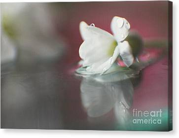 Macro Wild Floral Textured Canvas Print by Eden Baed