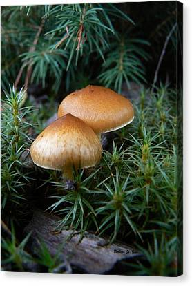Macrofungi Bc Wild Mushroom Canvas Print by Barbara St Jean