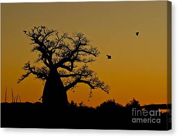 Madagascan Sunrise Canvas Print