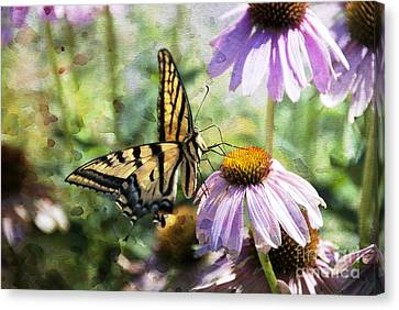 Madame Butterfly Canvas Print by Juli Scalzi
