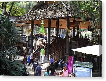 Maesa Elephant Camp - Chiang Mai Thailand - 01135 Canvas Print