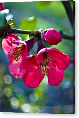 Magenta Blooms Canvas Print