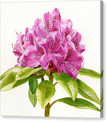 Magenta Colored Rhododendron Square Design Canvas Print by Sharon Freeman