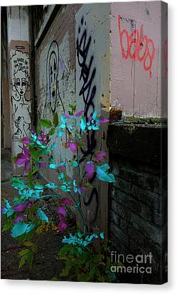 Magenta Cyan And Babs Canvas Print by Jacqueline Athmann