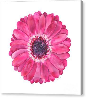 Magenta Gerbera Daisy Canvas Print by Amy Kirkpatrick