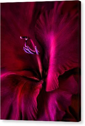 Magenta Gladiola Flower Canvas Print by Jennie Marie Schell