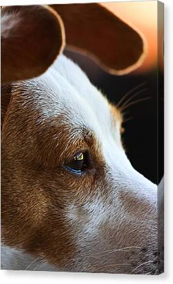 Maggie May Canvas Print by Mark Alder