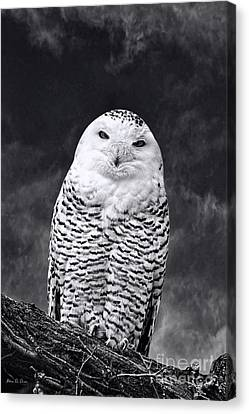 Magic Beauty - Snowy Owl Canvas Print