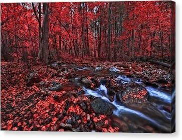 Canvas Print featuring the photograph Magic Forest 1 by Thomas Born