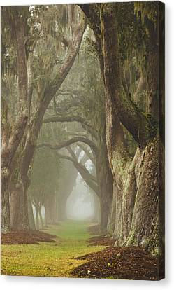 Magic Forest Canvas Print by Barbara Northrup