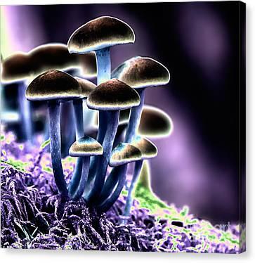 Magic Mushrooms Canvas Print by Melody Watson
