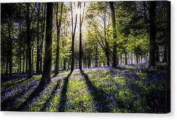 Magic Wood Canvas Print by Ian Hufton