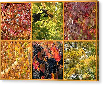 Magical Autumn Colors Collage Canvas Print by Carol Groenen