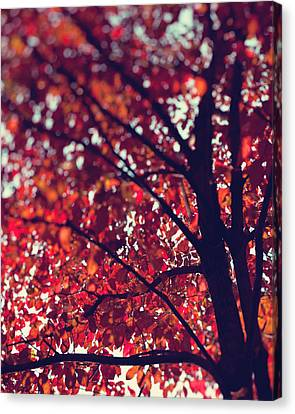 Magical Autumn Canvas Print by Kim Fearheiley