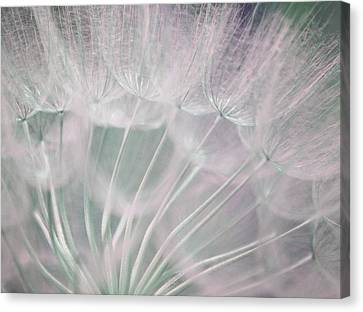 Magical Beauty Canvas Print by The Art Of Marilyn Ridoutt-Greene