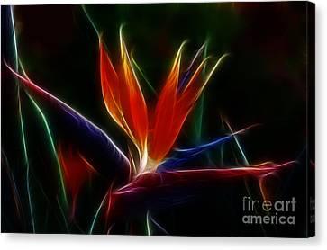 Magical Bird Of Paradise Canvas Print by Sandra Bronstein
