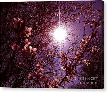 Canvas Print featuring the photograph Magical Blossoms by Vicki Spindler