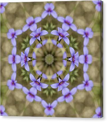 Magical Bluet Wildflower Kaleidoscope Canvas Print