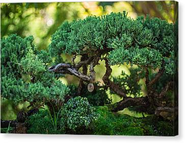 Canvas Print featuring the photograph Magical Bonsai by Julie Andel