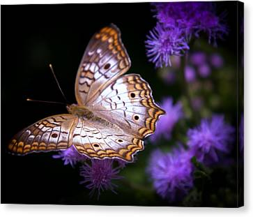 Magical Butterfly Canvas Print by Karen Wiles