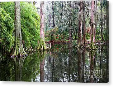 Magical Cypress Swamp Canvas Print by Carol Groenen
