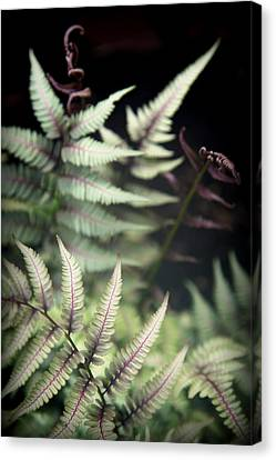 Magical Forest 1 Canvas Print by Karen Wiles