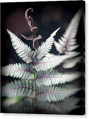 Magical Forest 2 Canvas Print by Karen Wiles