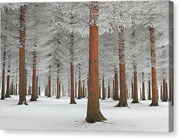 Frosty Canvas Print - Magical Forest by Dragisa Petrovic