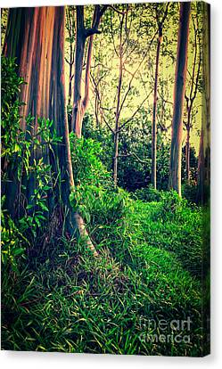 Magical Forest Canvas Print by Edward Fielding