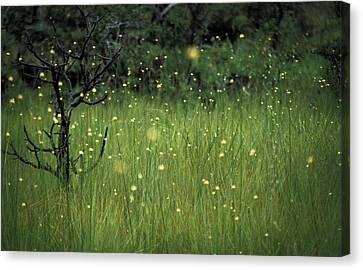 Canvas Print featuring the photograph Magical Land by Lana Enderle