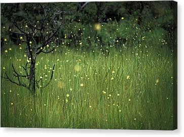 Magical Land Canvas Print by Lana Enderle