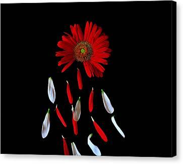 Magical Canvas Print by Marwan Khoury
