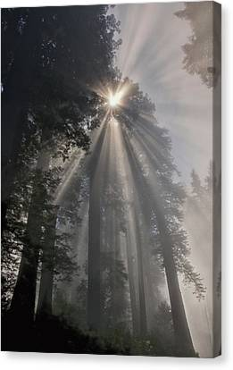 Magical Morning Canvas Print