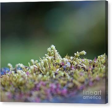Magical Moss Canvas Print by Sarah Crites