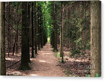 Magical Path Canvas Print by Bruce Patrick Smith