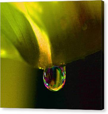 Magical Raindrop Canvas Print
