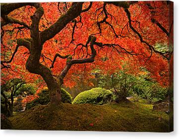 Magical Tree Canvas Print by Bjorn Burton