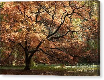 Magnificent Autumn Canvas Print by Anne Gilbert