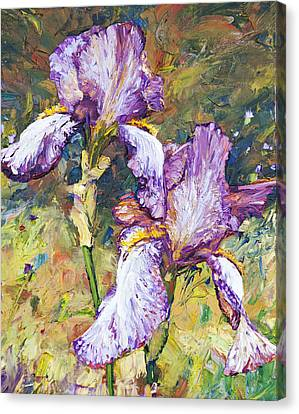 Magnificent Iris Canvas Print by Steven Boone