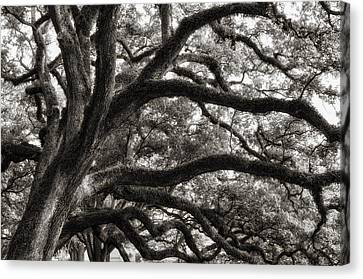 Canvas Print featuring the photograph Magnificent Oaks Of Louisiana by Photography  By Sai