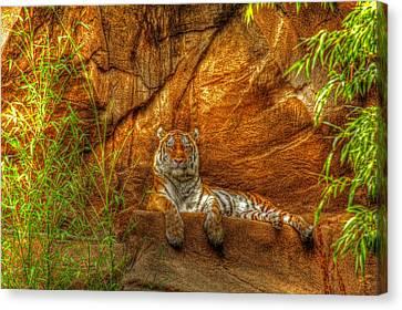 Magnificent Tiger Resting Canvas Print