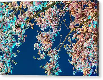 Magnolia-greenlight Canvas Print by Susan Cole Kelly Impressions