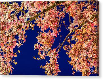 Magnolia - Redlight  Canvas Print by Susan Cole Kelly Impressions