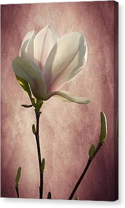Canvas Print featuring the photograph Magnolia by Ann Lauwers