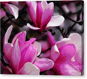 Canvas Print featuring the photograph Magnolia Blossoms by Olivia Hardwicke