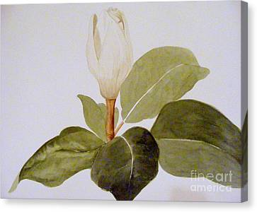 Canvas Print featuring the painting Magnolia Bud II by Nancy Kane Chapman