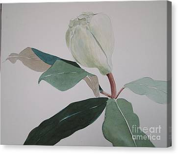 Canvas Print featuring the painting Magnolia Bud by Nancy Kane Chapman