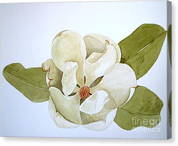 Canvas Print featuring the painting Magnolia Highlight by Nancy Kane Chapman