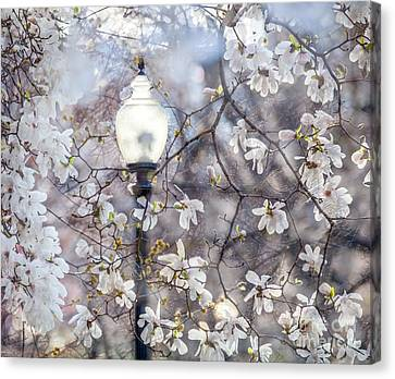 Magnolia Impression Blend Canvas Print by Susan Cole Kelly Impressions