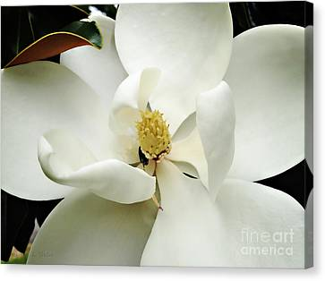 Magnolia In Color Canvas Print by Nancy E Stein